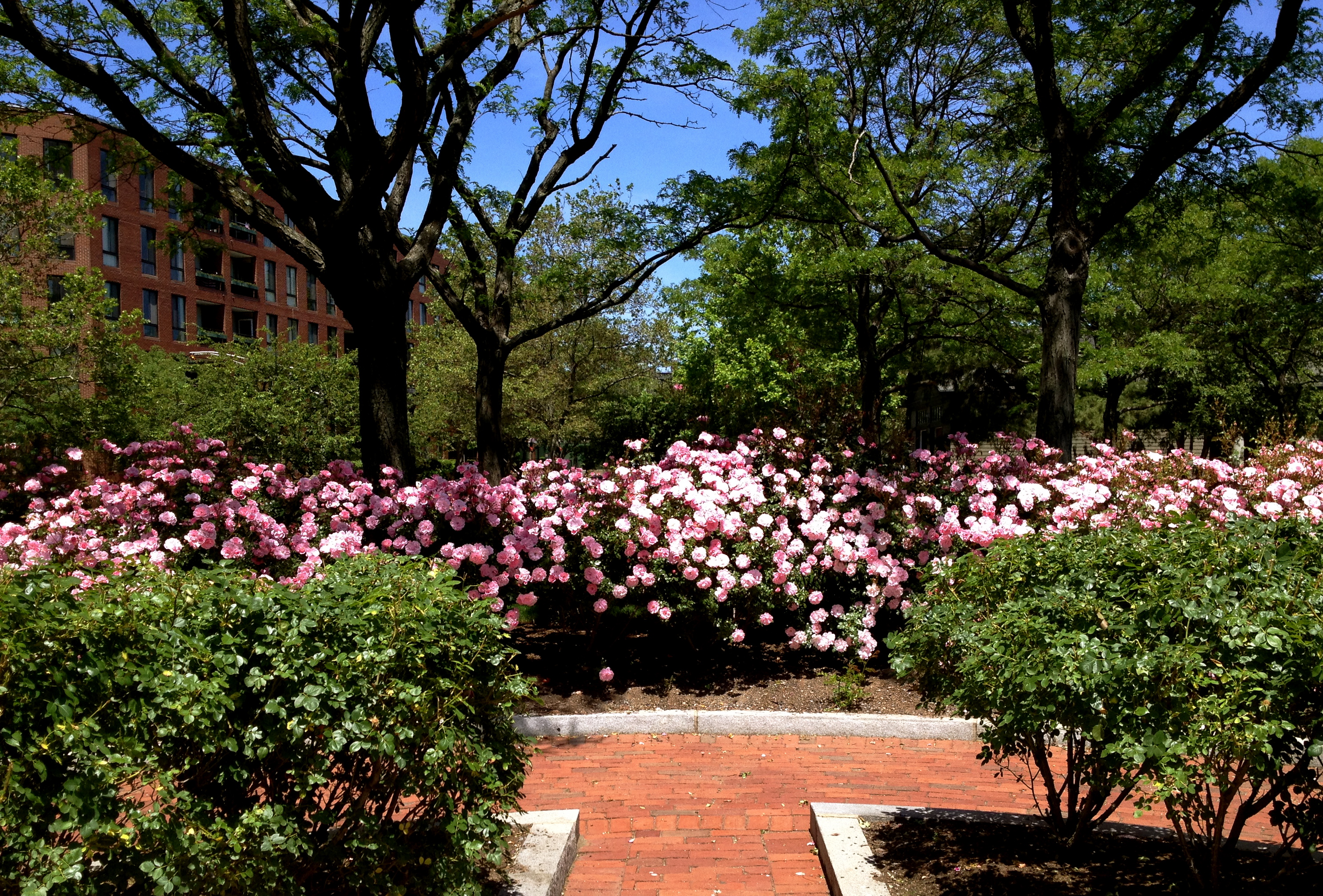 boston does not have many gardens in the downtown which adds to the appeal of this intimate space simple and elegant the rose garden provides an - Pictures Of Rose Gardens