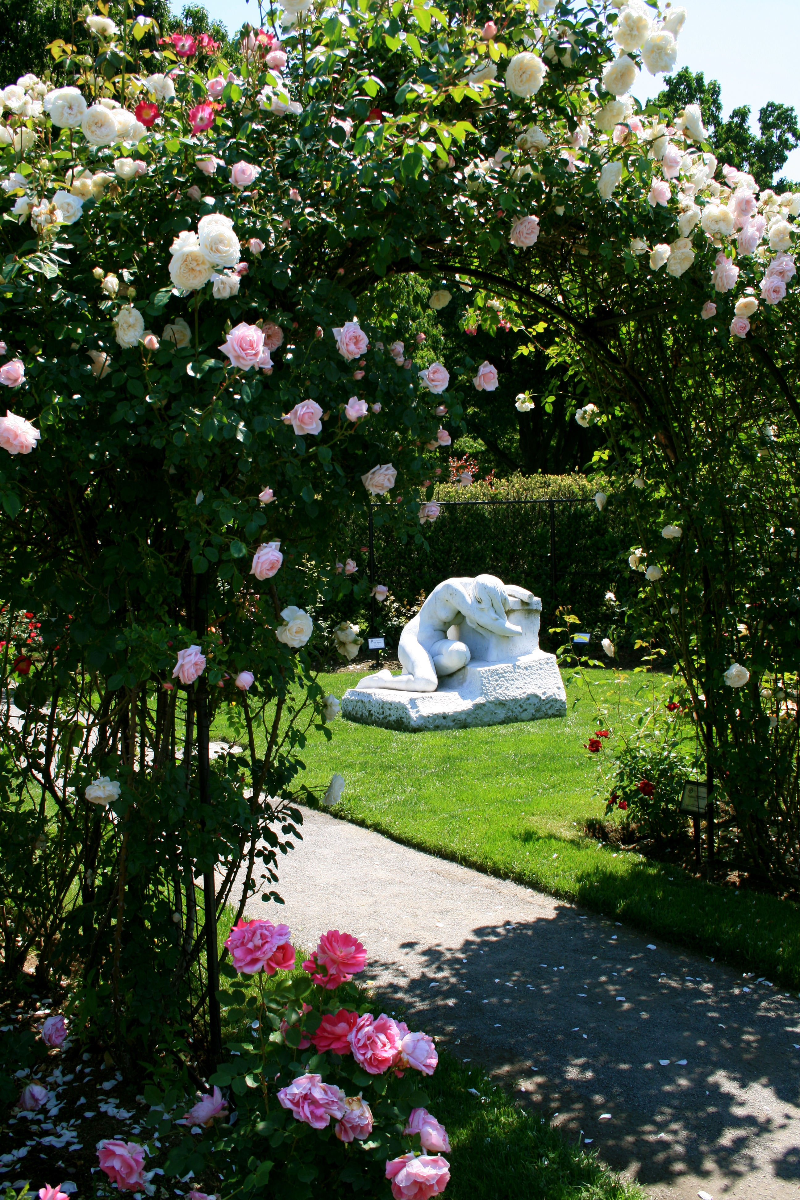 Roses In Garden: Landscape NotesLandscape Notes
